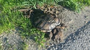 Dead Turtles